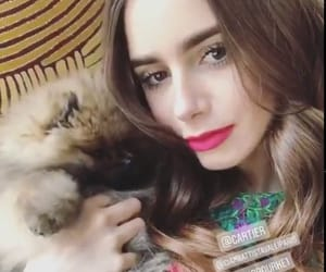dog, lily collins, and emily in paris image