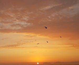 sunset, sky, and birds image