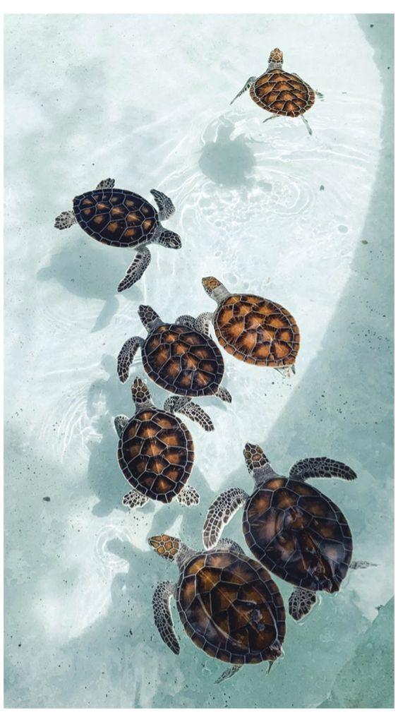blue, sea, and turtles image
