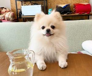 dog, instagram, and tatsuo image