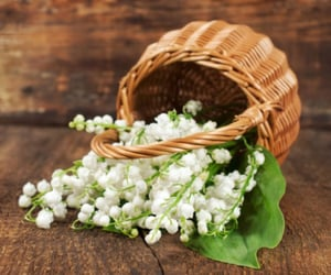 basket, lily of the valley, and beautiful image