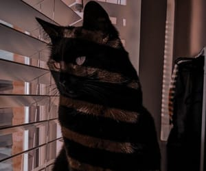 black cat, cat, and pretty image