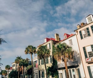 charleston, palm trees, and Houses image