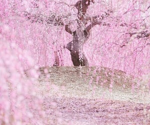 blossom, japan, and pink image