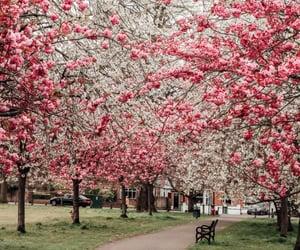 blossom, blossoms, and spring image