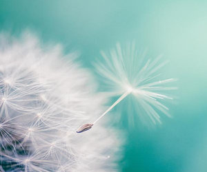 dandelion, photography, and spring image