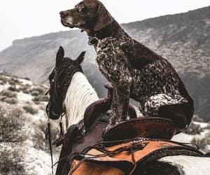 dog, horse, and montana image