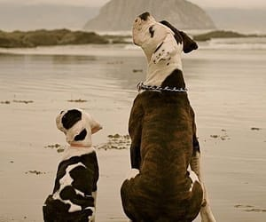 dog and perro image