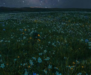 flower, flowers, and night image
