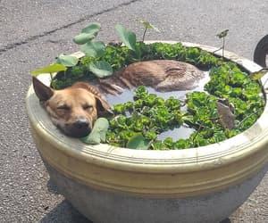 """Hot Pod Dog"" / Quelle: everythingfox-tumblr.com"