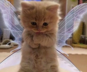 animals, cat, and fairy wings image