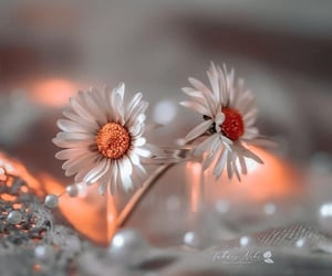 flower, petal, and twinkle image