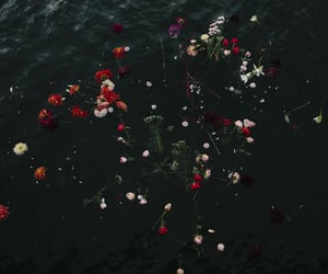 Floating Flowers in dark River   @eve365