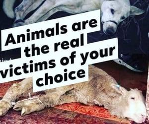 animal cruelty, dog, and fast food image