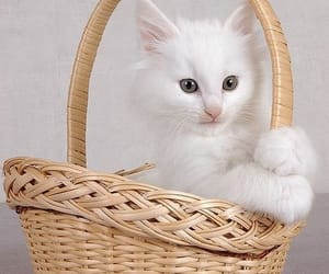 wicker baskets and white cat