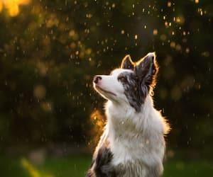 animals, dogs, and rain image