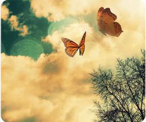 butterfly, sky, and photography image