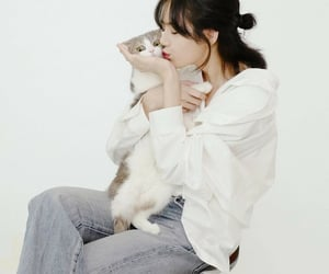 blackpink, cats, and pet's image