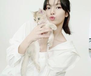 lisa, minimalist, and cat's image
