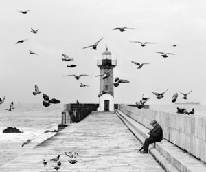 bird, black and white, and photography image