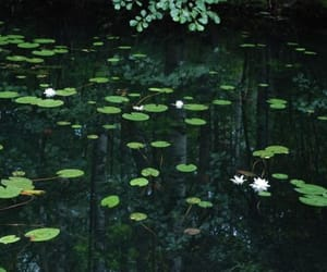 beauty, lilly, and water image