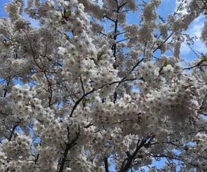 beautiful, pretty, and cherrytree image