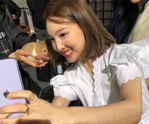 animal, twice, and cute image