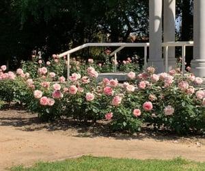 backyard, beautiful day, and flowers image