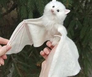 adorable, fly, and bat image