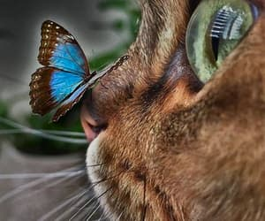 aesthetic, butterfly, and cat image