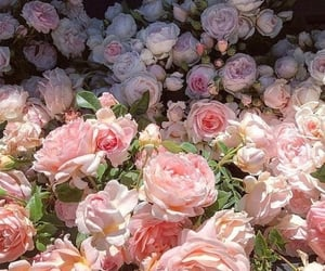 aesthetic, beautiful, and floral image