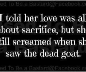 goat, funny, and love quotes image