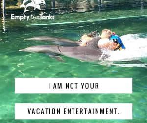 vacation, marineland, and disgusting business image