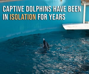 animal cruelty, dolphin, and dolphins image