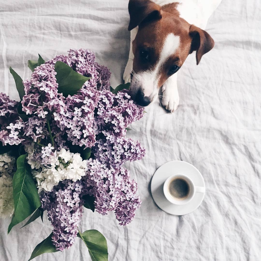 coffee, dog, and liliacs image