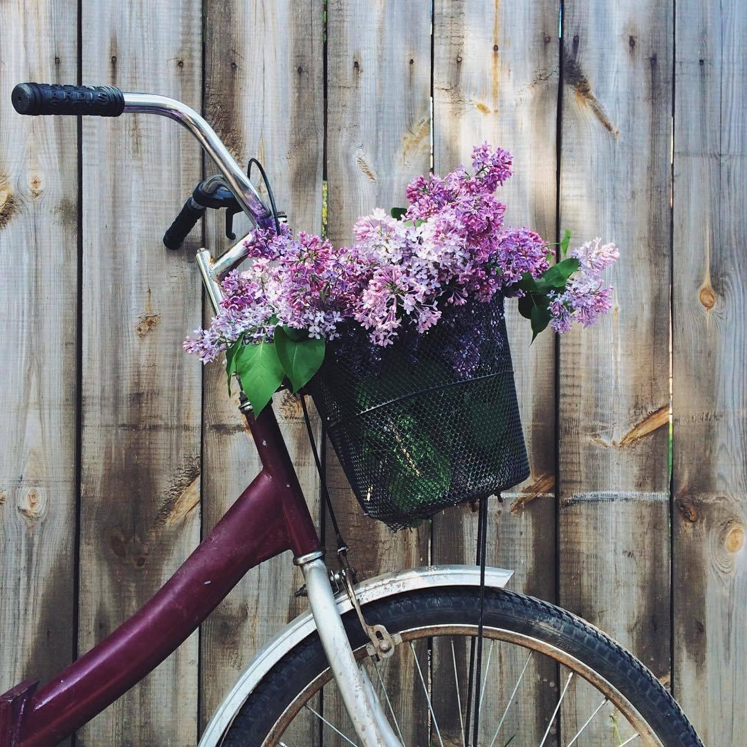 bike and liliacs image