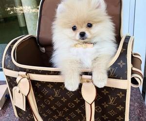 adorable, bag, and dog image