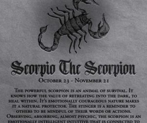 astrology, horoscope, and scorpio image