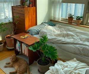 bedroom, cat, and cosy image