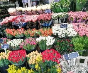 #flowers #paris