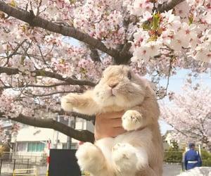 animals, rabbit, and aesthetic image