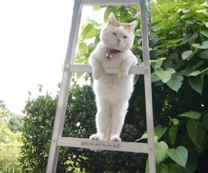 cat, kitten, and ladder image