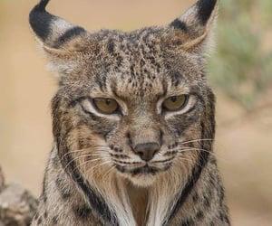 Animales, naturaleza, and felino image