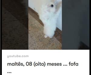 Animais, maltes, and dog image