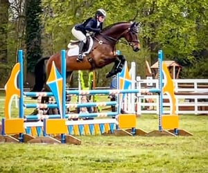equestrian, horse, and show image