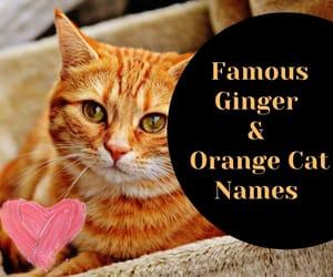 cat names, cute cat names, and ginger cat names image