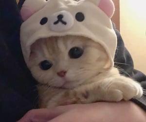 animals, kitten, and kittens image