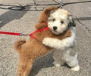dog, pet, and puppy image