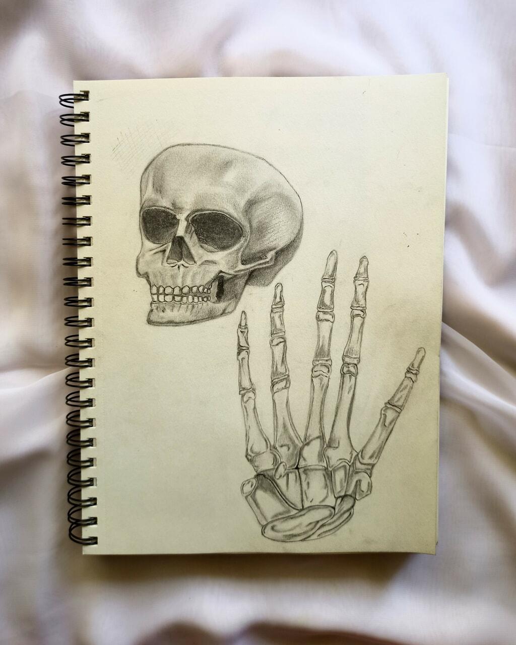 anatomy, artwork, and art image