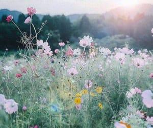 Among the wildflowers. | Flowers, Beautiful flowers, Nature